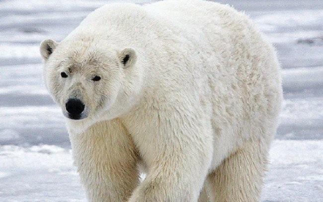 Самые крупные в мире животные