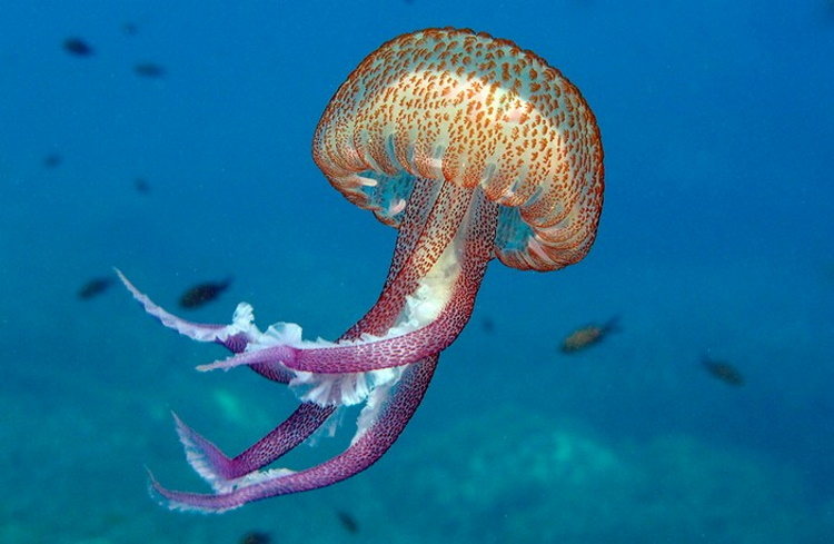 Самые опасные виды медуз, с которыми лучше никогда не встречаться
