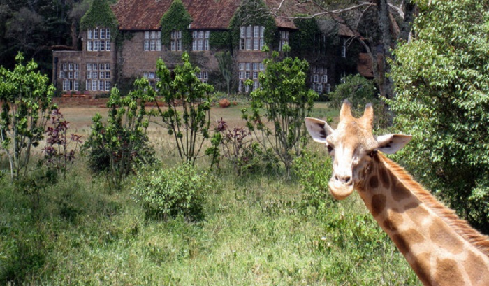 20 занимательных фактов о жирафах