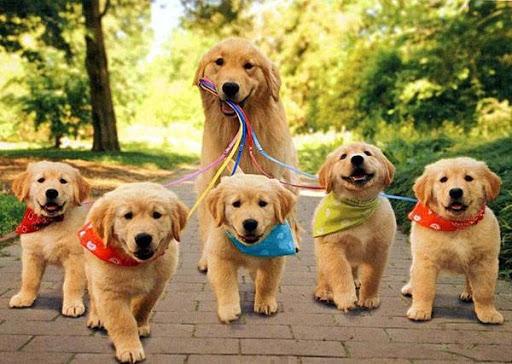 красивые собаки