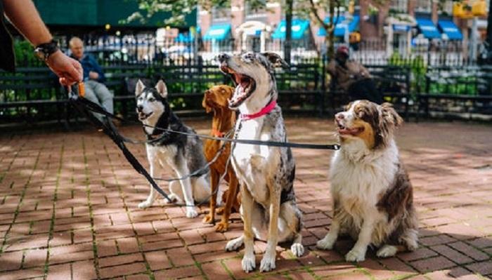 Лучший друг человека: 50 красивых фото собак