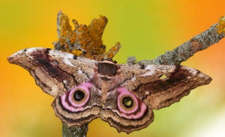 30 редких и необыкновенно красивых бабочек в мире