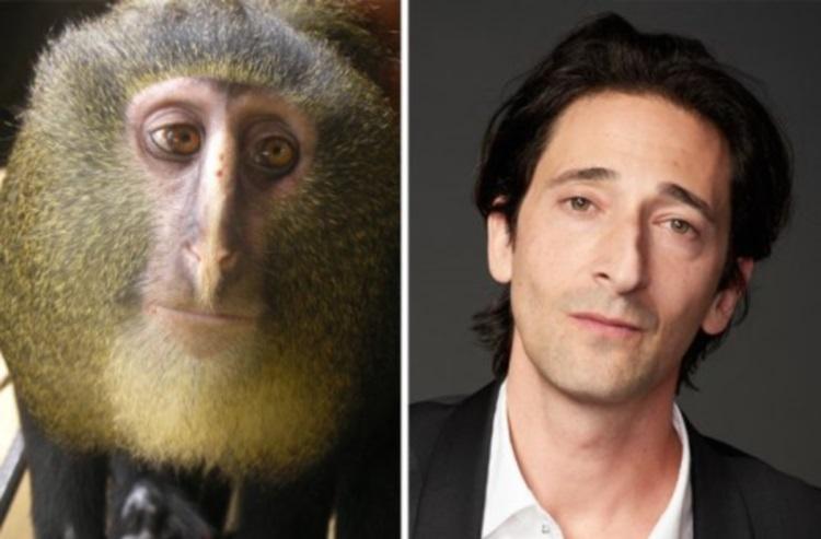 Поразительное сходство: 30 занимательных фото зверей, похожих на знаменитостей
