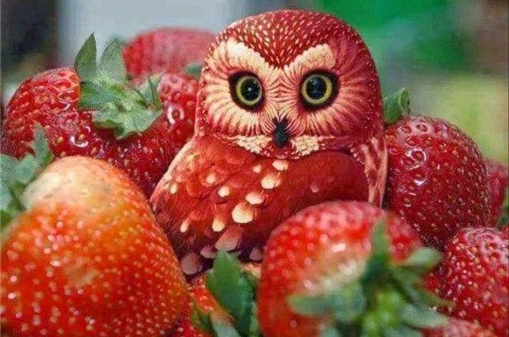 Очень красивый карвинг по фруктам и овощам, 50 фото