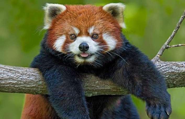 Самые милые представители животного мира