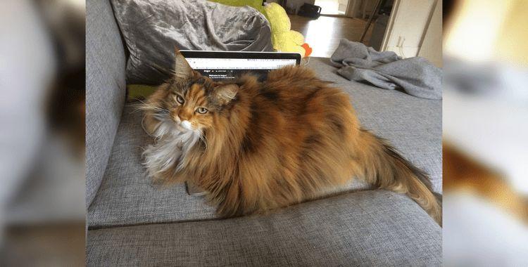 Коты знают, кто в доме хозяин: 50 веселых снимков