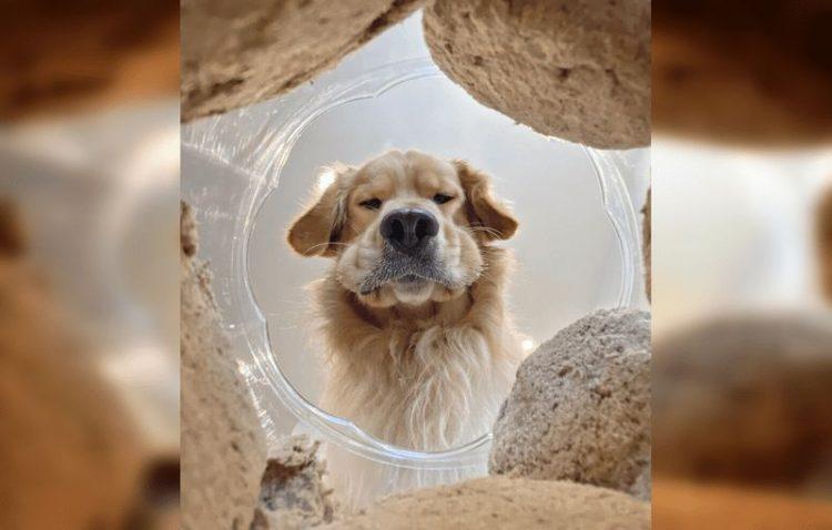 Комичные фото животных, которые обязательно скрасят ваш день