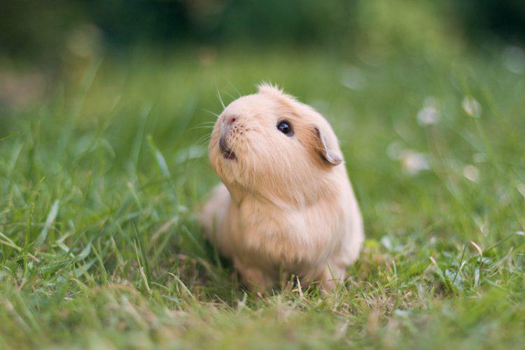 Обаятельные малыши из мира животных