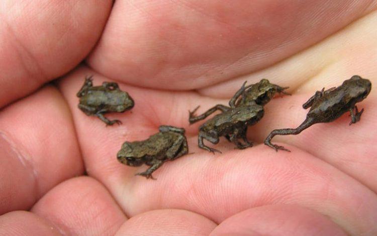 Самые маленькие животные в мире, 30 фото