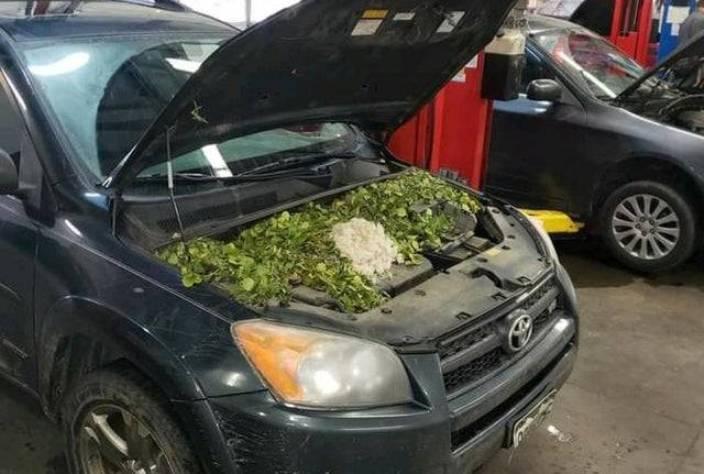 30 забавных находок под капотом автомобилей