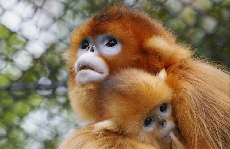 Фотографии новых необычных видов животных, открытых совсем недавно
